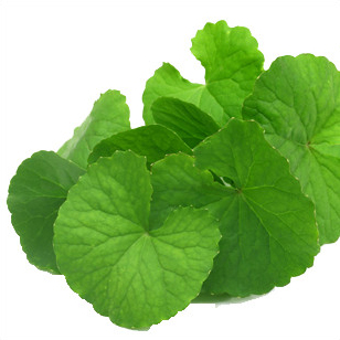 Gotu kola is one of the most important herb in Ayurveda and has been used as a typical anti-aging herb.